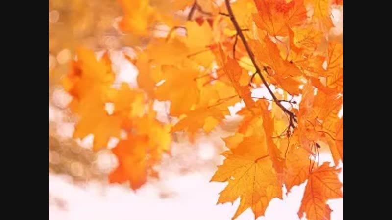 Школьные каникулы. Осенняя смена, Рыжая осень, 2018