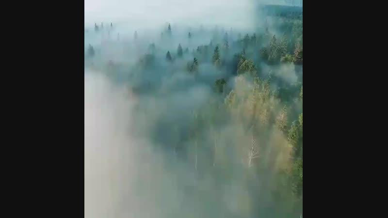 Полёт над туманным лесом В районе реки Усьва