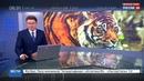 Новости на Россия 24 • По торговому центру в Хабаровске разгуливал тигр