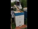 Проверяем рамки сотового меда