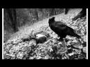 Чёрный ворон.(Протяжная песня донских казаков)