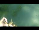 Подводная охота на краба