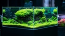 PLANTED TANK WITH A BREATHTAKING 360 VIEW 4K CINEMATIC BY GREEN AQUA
