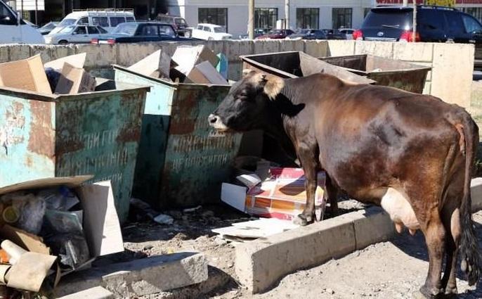 Жителей Урупского района накажут за появление бесхозного скота на землях общего пользования