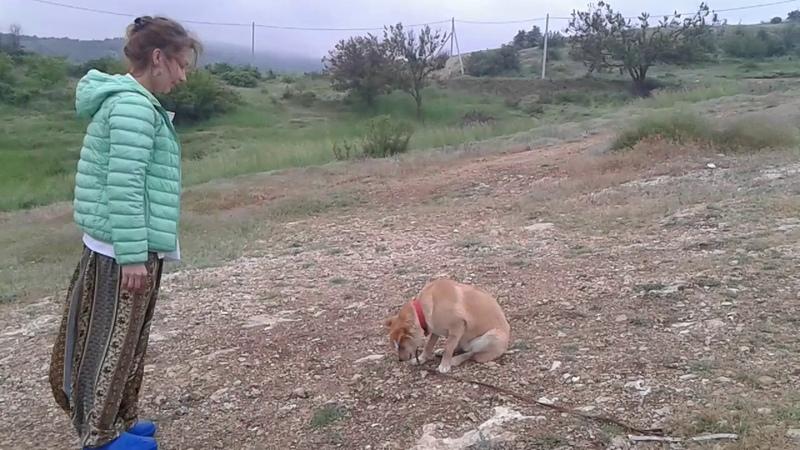 Выдержанная собачка Радость общения Севастополь Задание 3 Лиска