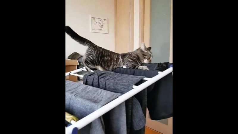 Кот помощник по уборке дома