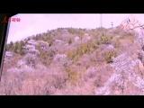 Отправимся в весну на поезде по Великой китайской стене через море цветов!
