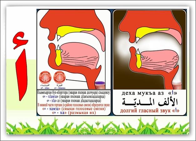 Часовая программа по заучиванию арабского алфавита