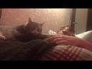 1425). 06.03.2017 - Кошечка Джейн (теперь Майя) живет дома (видео из дома)