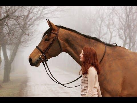 ~ Конный спорт ~ Zayde Wolf Walk throught the fire ~ Equestrian sport ~
