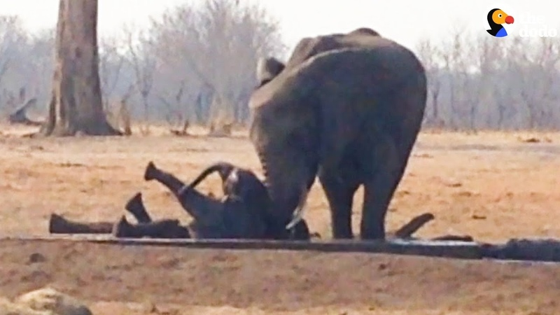 Herd Of Elephants Saves Another Family's Baby | The Dodo