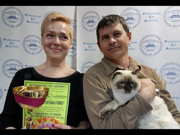 Отзывы о 16-й выставке кошек PCA on-line 21-22.04.2018г
