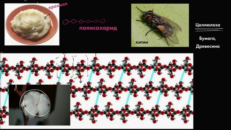 Гидролиз (видео 7)| Макромолекулы | Биология