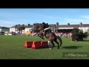 Клип для любителей лошадей..mp4