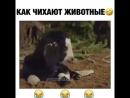 Кто смешнее всего чихнул?)