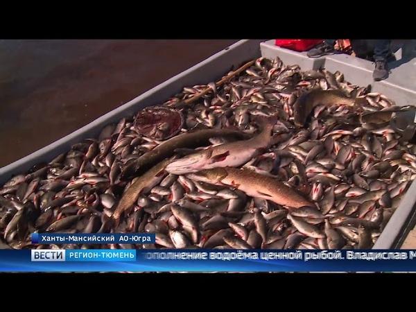 Популяцию пеляди планируют увеличить в озере Ендра