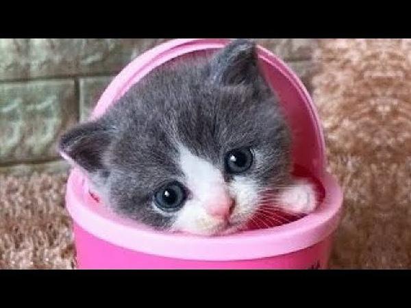 「猫かわいい」 すごくかわいい子猫 最も面白い猫の映画 303