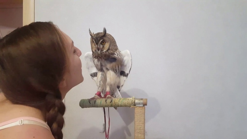 Кёрби Мерлин Монро| дуем на сову