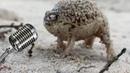 Rapping Roadman Frog