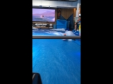 Oasis Surf restaurant surf