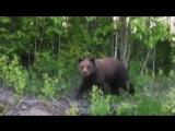 Встретили медведя под Северодвинском