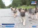 В Кузьмолово неизвестный привёз и бросил на кладбище два десятка щенков