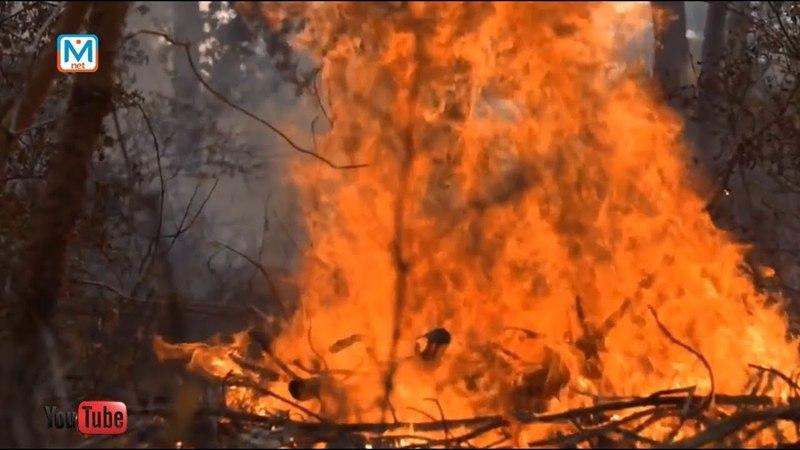 Кто поджигает леса? Особый противопожарный режим в Кузбассе