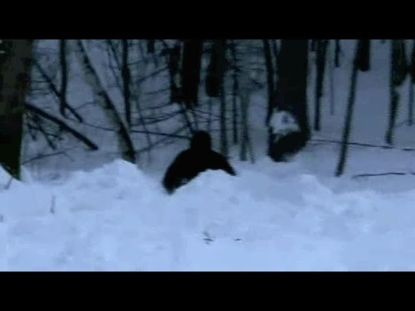 SLEDDING SASQUATCH ENCOUNTER CAPTURED ON VIDEO