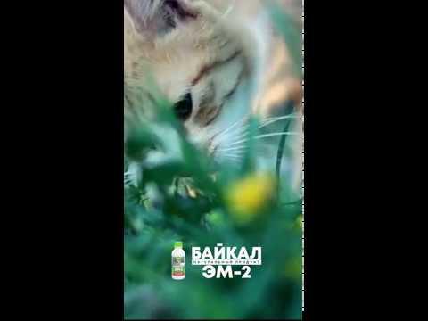 Байкал ЭМ 2 для кошек
