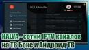 HALVA TV APP сотни IPTV каналов на ТВ Бокс и Андроид ТВ