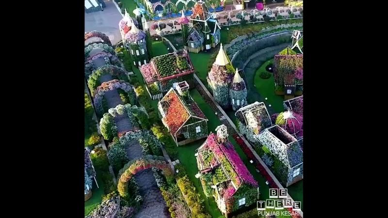 Затеряйтесь в чудесной стране цветов в дубайском саду Miracle Garden