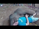 Baby elephant kisses jubilant man with its mouth around his face