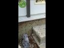 Как гусеницы реагируют на громкий звук