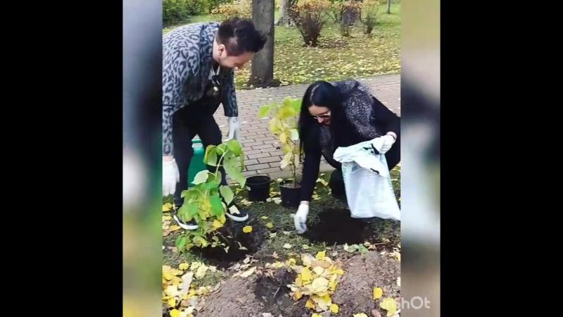 Проект укоренись с Ольга Цветкова высаживаем гортензии вместе с Лариса Гордьера