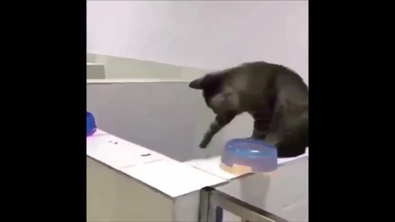 Шарик пинг-понг