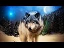 Классная ПЕСНЯ!👍 БЕРЁТ ЗА ДУШУ! Послушайте! Вячеслав Сидоренко - Волк