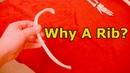 Why Did God Use A Rib To Make Eve The regenerating regrowing amazing rib bone marrow stem cells DNA