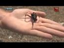 Ядовитые пауки начали охоту на жителей Волгограда