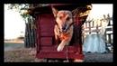 Собачья будка в японском стиле Реакция собакена на новое жильё