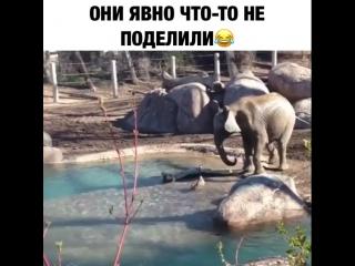 Гусь и Слон )