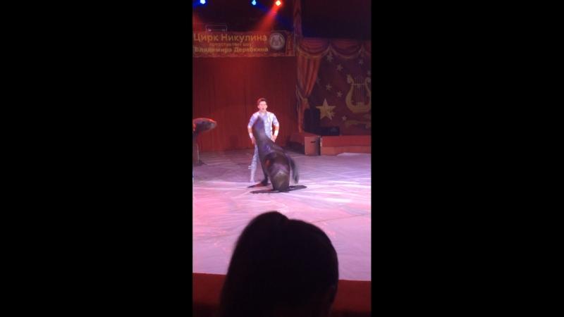 Цирк Никулина в Химках 6