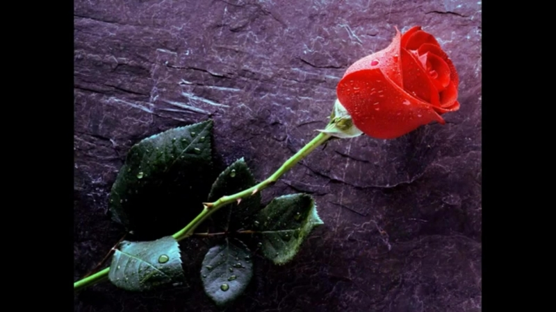 Фон Гете, Иоганн Вольфганг - Дикая роза (Heidenröslein). Муз. Ф. Шуберт.