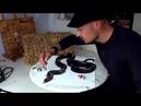 Реалистичный 3D рисунок змеи