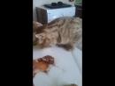 Кеша обедает