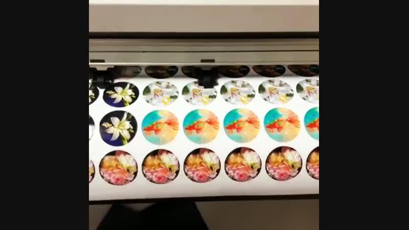 Резка магнитов на плоттере плоттернаярезка типография альфапитер интерьернаяпечать