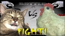 ЛИЛБАКСИК НАПАЛ НА КУРОЧКУ CHICKEN VS CAT
