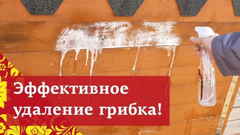 ! ЭФФЕКТИВНЫЙ и быстрый способ очистки дерева от ГРИБКА плесени грязи - БИО ОЧИСТИТЕЛЬ