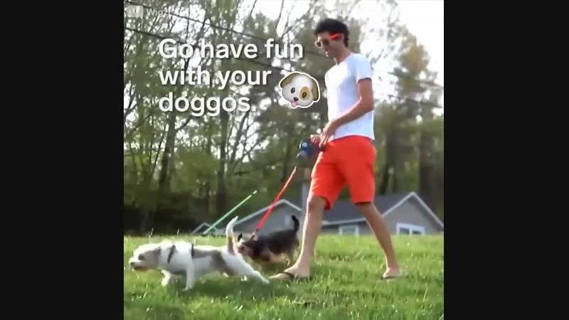 Your doggos won't get tangled up with this dual leash!