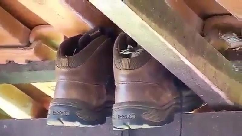 Мужчину поджидал сюрприз в оставленных на даче ботинках