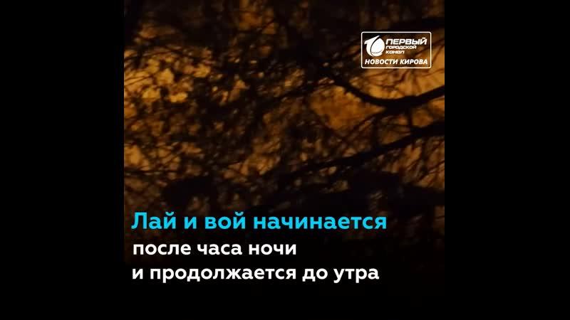 В Кирове стая псов «кошмарит» кировчан